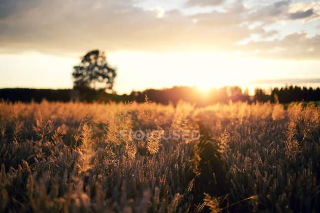 Sonnenuntergang über den Agrarbereich — Stockfoto