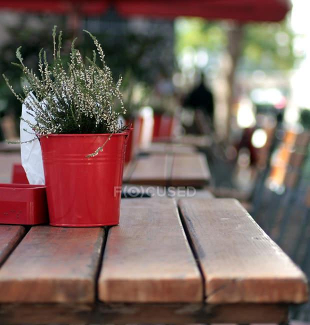 Wachsende Zimmerpflanze in roten Topf auf Holztisch im freien — Stockfoto