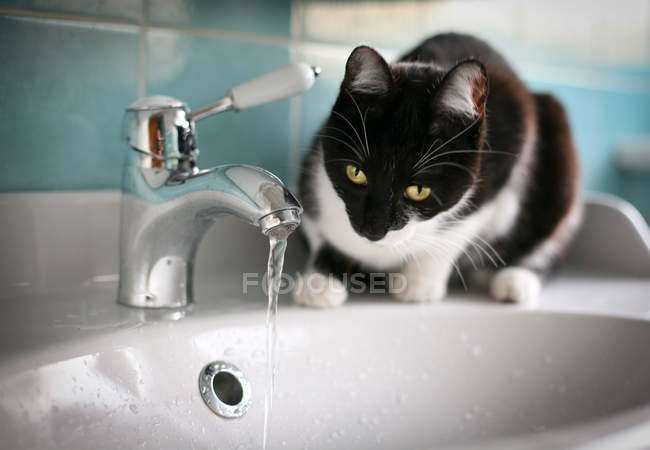 Cat looking at flowing tap — Stock Photo