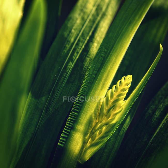 Листья зеленого растения — стоковое фото