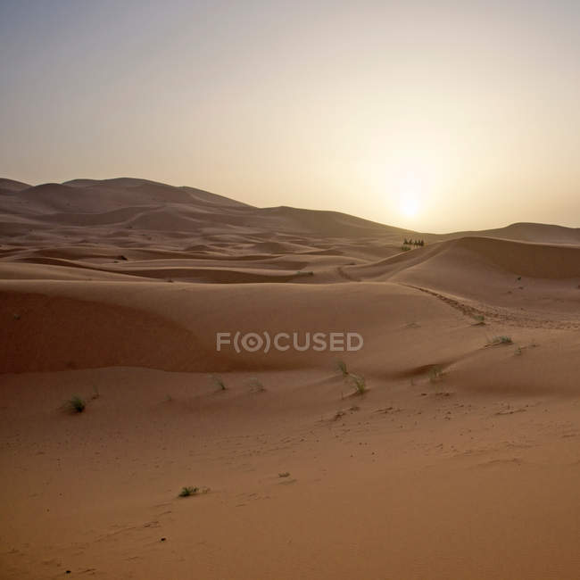 Sunset over dunes of desert — Stock Photo