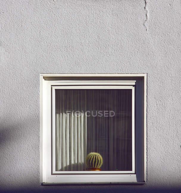De la ventana con plantas de cactus - foto de stock