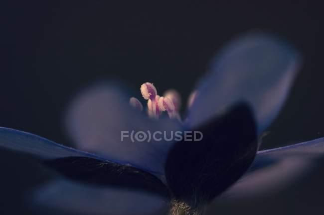 Крупным планом вид цветок цветок, тёмный фон — стоковое фото