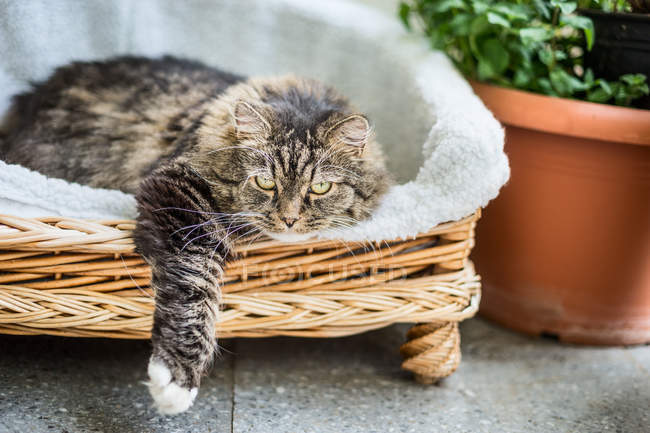 Daytime view of cat laying in pet bed near flowerpot — Stock Photo