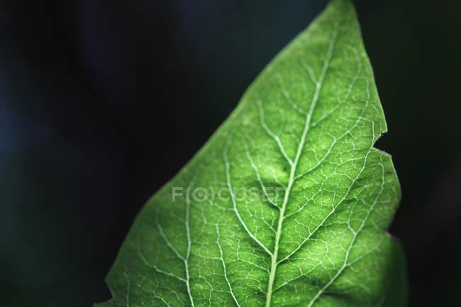 F завод лист текстуры — стоковое фото