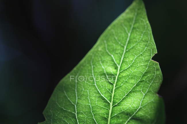 F plant leaf texture — Stock Photo