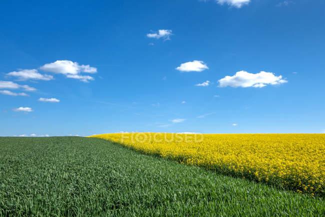 Paysage avec des champs jaunes et verts — Photo de stock