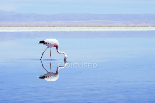 Salt lake landscape in light colors and flamingo bird sde view — Stock Photo