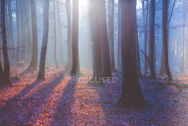 Sun light breaking through the trees — Stock Photo