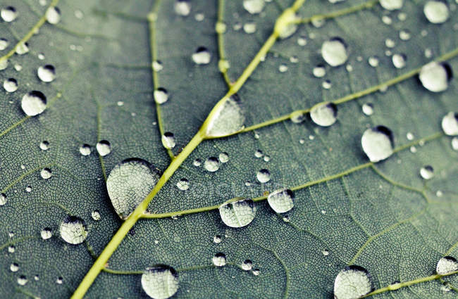 Feuilles des plantes avec des gouttes de rosée — Photo de stock