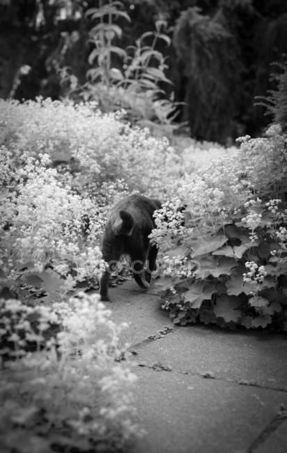 Tagsüber Ansicht der Katze im Garten Blumen — Stockfoto