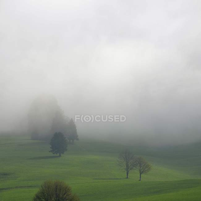 Trees and field in foggy weather — Stock Photo