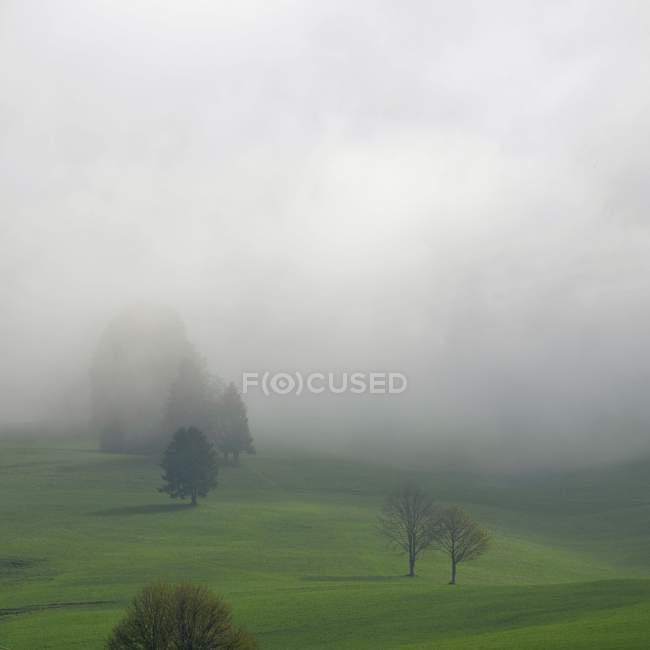 Alberi e campo in tempo nebbioso — Foto stock