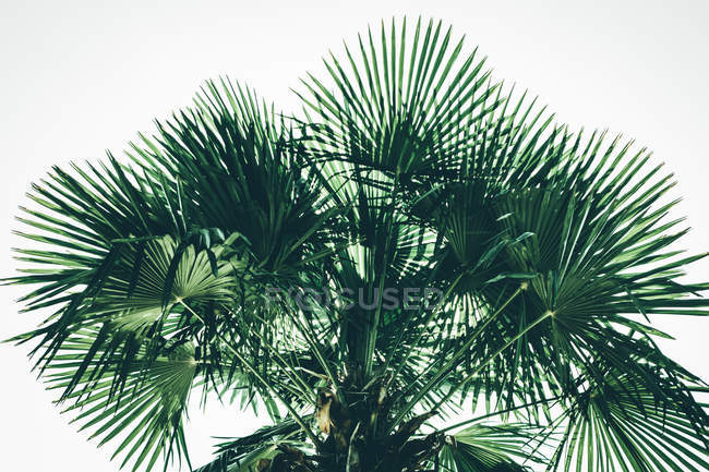 Exotic palm tree leaves — Stock Photo