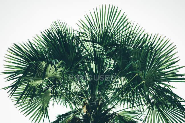Exotische Palmenblättern — Stockfoto