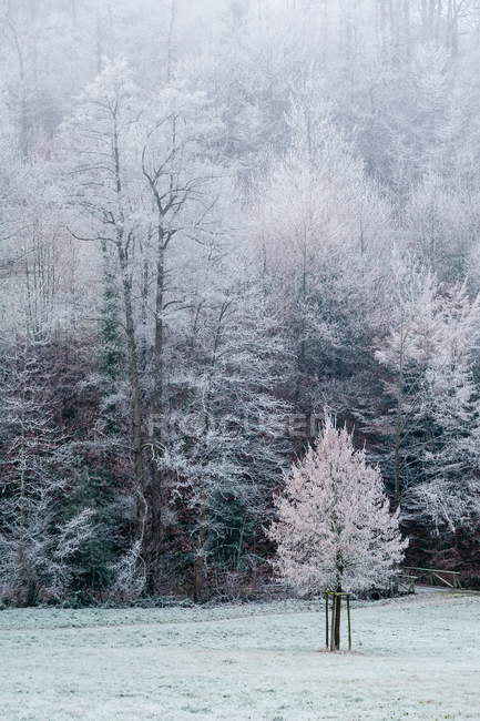 Winter season in forest, frozen trees and frost land — Stock Photo