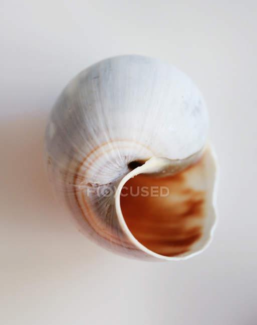 Guscio vuoto lumaca — Foto stock