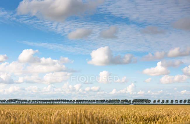 Landwirtschaftlichen Bereich und der Baumreihe — Stockfoto