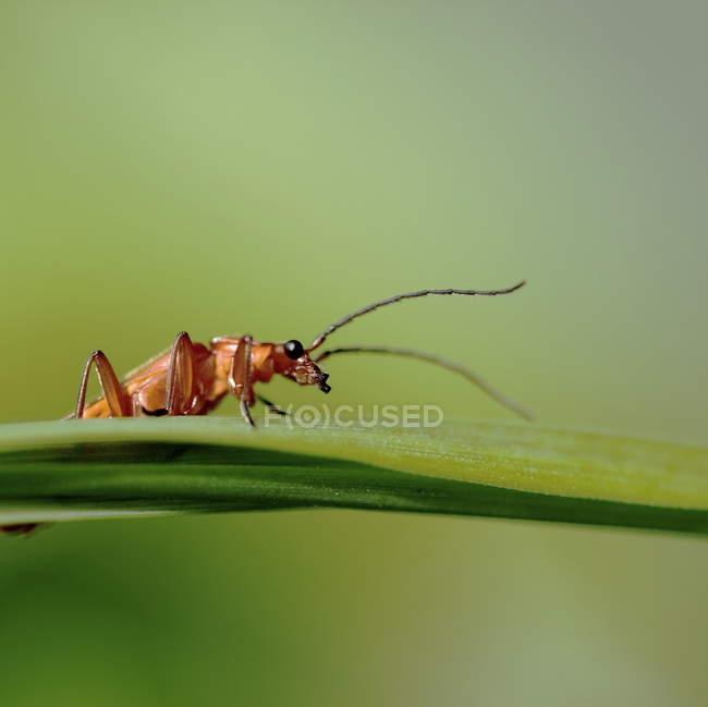 Крупным планом вид муравьёв на лист — стоковое фото
