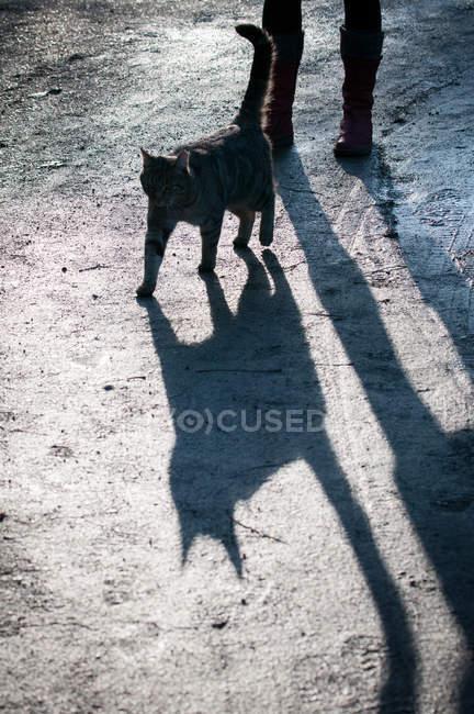 Black cat casting shadow — Stock Photo