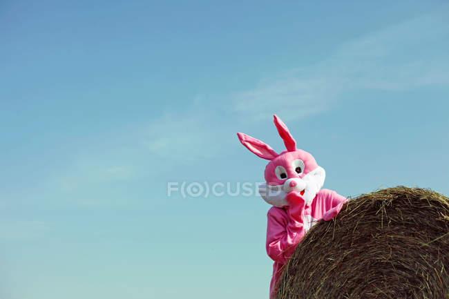 Hase mit Spaß im Feld — Stockfoto
