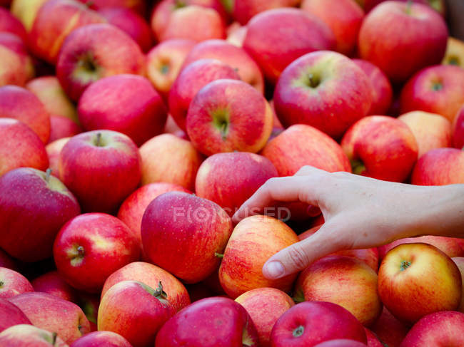 Hand touching heap of apples — Stock Photo
