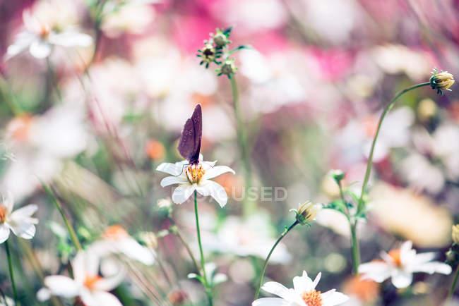 Цветущие цветы на лугу и бабочка — стоковое фото
