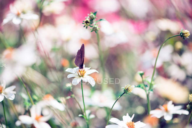 Flores desabrochando no Prado e borboleta — Fotografia de Stock