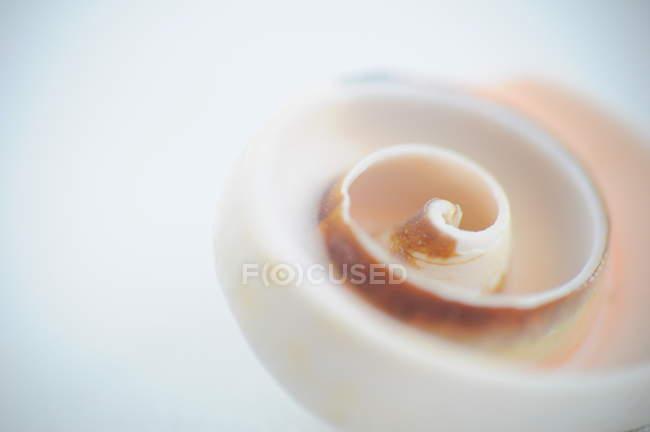 Closeup vista da espiral branco e marrom — Fotografia de Stock
