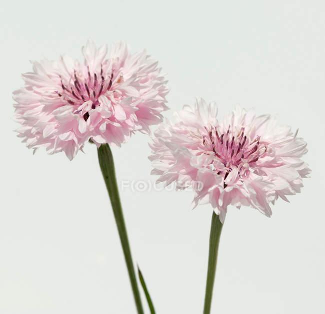 Flores silvestres - foto de stock