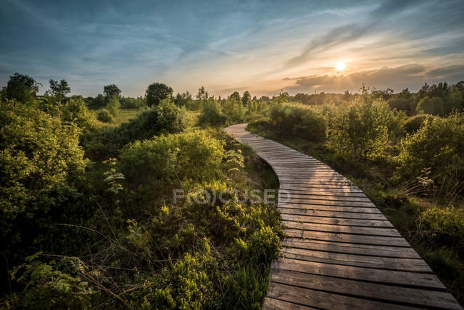 Footpath trough green landscape at sunset — Stock Photo