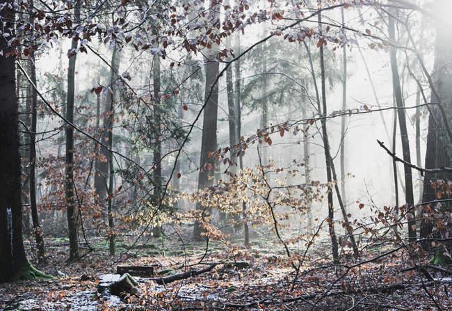 Лесные деревья в осенний сезон — стоковое фото