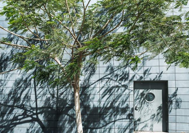 Gebäude mit Haustür und Baum mit grünen Blättern — Stockfoto
