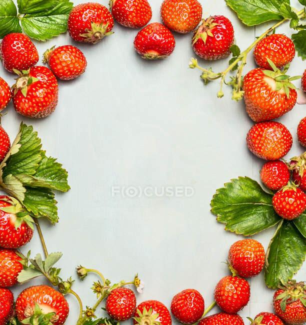 Fresh picked ripe strawberries — Stock Photo