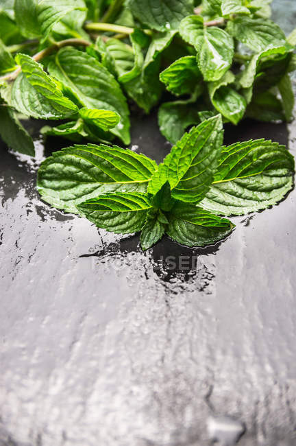 Green mint leaves on water surface — Stock Photo