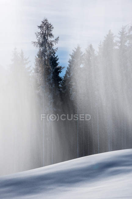 Nevicata in foresta dell'abete — Foto stock