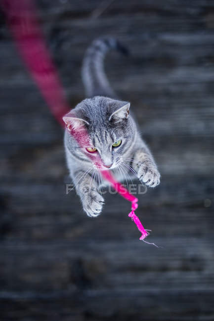 Cat playing with pink string — Stock Photo