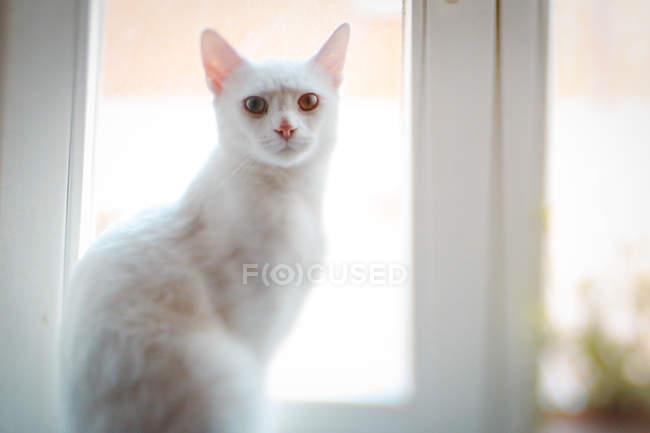 White cat sitting at window sill — Stock Photo