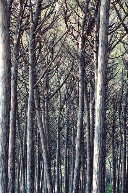 Дикие Осенний лес — стоковое фото