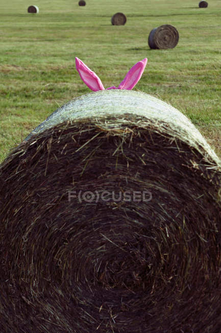 Bunny ears peer out  bale of straw — Stock Photo