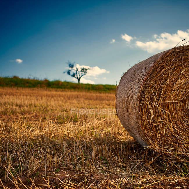 Balle de paille au champ automne — Photo de stock