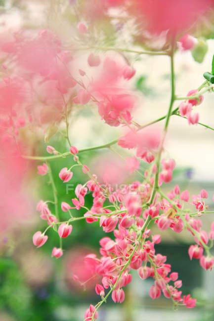Перегляд крупним планом рожеві цвітіння рослини — стокове фото