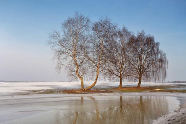 Ранняя весна пейзаж с деревьями — стоковое фото