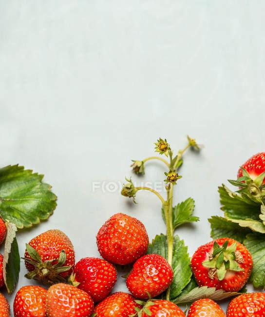 Fresas maduras cogidas - foto de stock