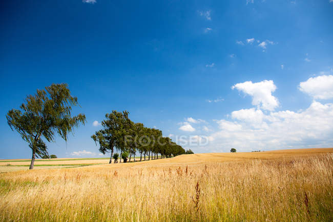 Agricultural field in sunny daytime — Stockfoto
