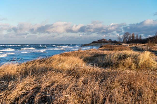Vista da grama do marram no litoral — Fotografia de Stock