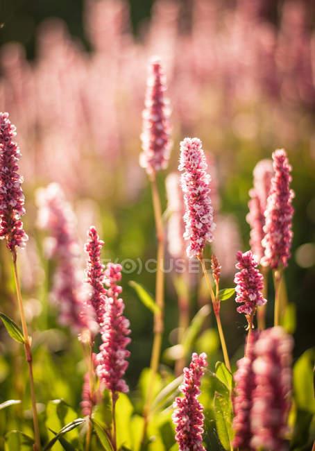 Дикие цветы на лугу — стоковое фото