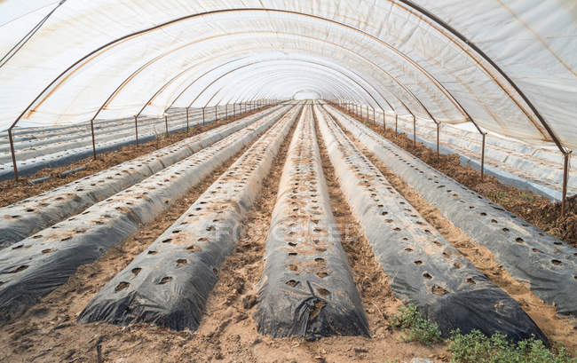 Greenhouse without plants — Stock Photo