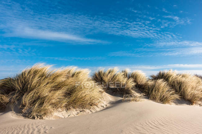 Praia de areia e grama secada na luz solar — Fotografia de Stock