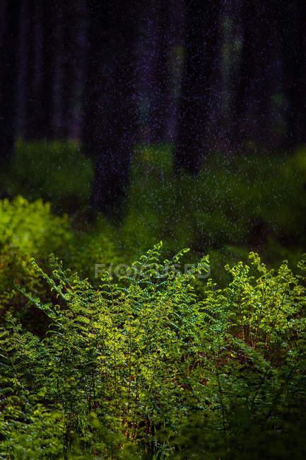 Brindilles et branches de bush de forêt — Photo de stock